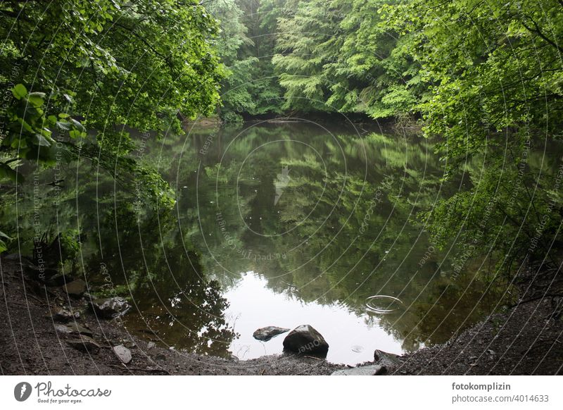 green silent forest lake with reflection Forest lake Reflection in the water Summer Water Lake Calm Lakeside Surface of water Water reflection Idyll trees Stone