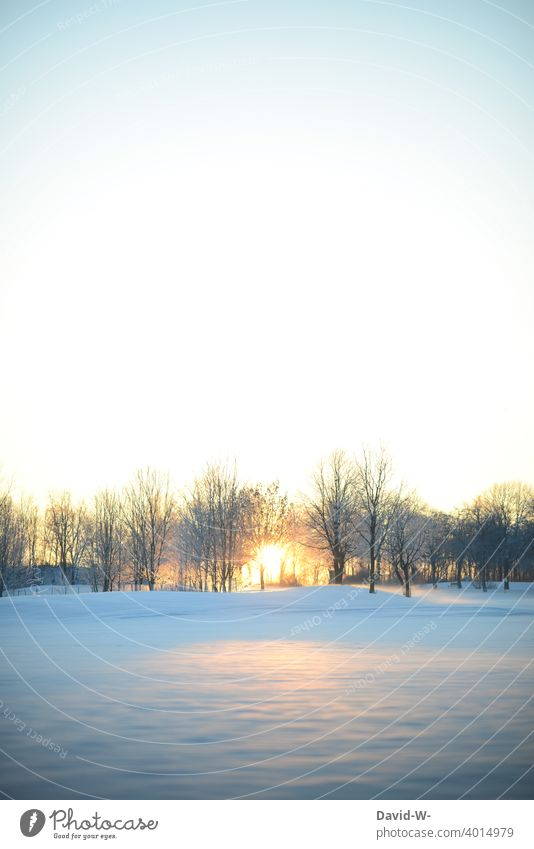 Sunrise in a winter landscape Winter's day Winter mood Snow Cold Wintertime beginning of winter White Weather Sunbeam