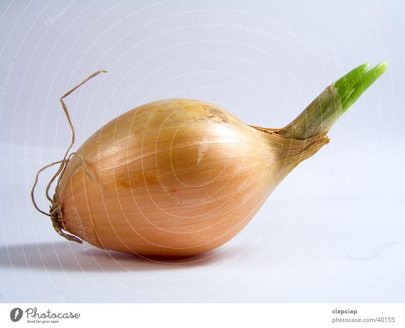 onion Onion Vegetable obiected cebula