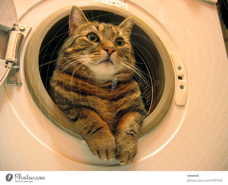 laundry rent Cat Pelt Cleaning Washer Nest Porthole Laundry Personal hygiene already laundered Domestic cat Gaze Funny Whimsical Serene Calm Cleanliness