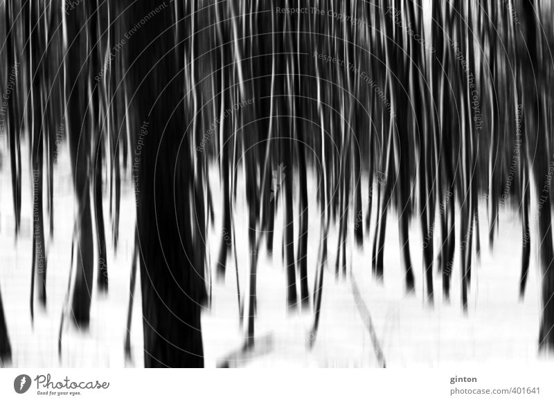 Winter forest abstract Environment Nature Landscape Plant Elements Snow Tree Forest Dark Bright Cold Natural Black White Symmetry Black & white photo