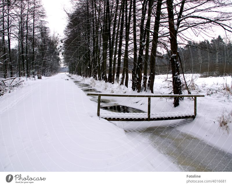Snowed in are paths, streams, bridges and forests. winter landscape Winter White Cold Nature Landscape Snowscape Winter mood Winter's day Tree Frost
