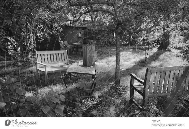 Secret Garden Idyll Grass Tree benches Garden table Peaceful Sunlight Meadow Table Autumn Exterior shot gnarled Tree trunk Bushes Deserted Nature Calm Plant