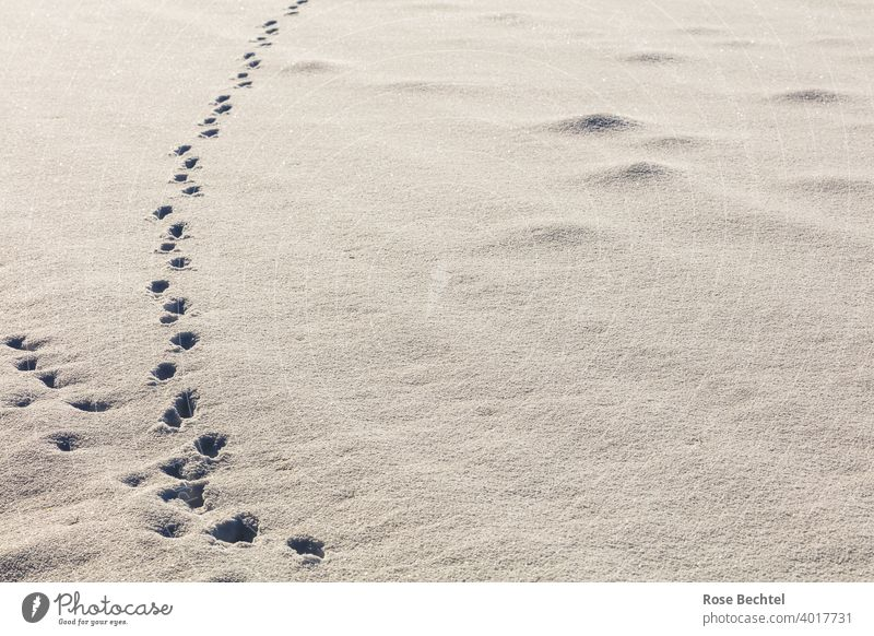Tracks and molehills in the snow trace Animal tracks Snow Winter White Deserted Snow track Nature Snow layer Exterior shot Lanes & trails Cold Day Colour photo