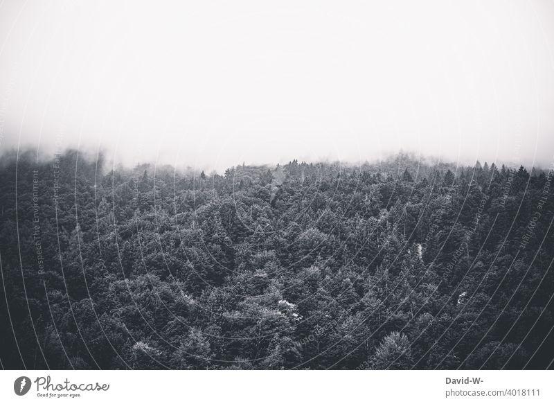 Forest disappears in the fog Fog Dark swallow Shroud of fog Fog bank somber Creepy trees Cloud forest Landscape Wall of fog