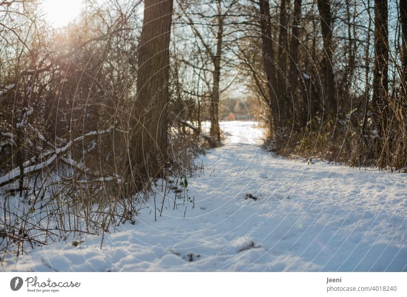 Snow-covered hiking trail in winter | The sun flashes through the branches and twigs of the trees Winter snow-covered Hiking trails Sunlight Back-light Sunbeam