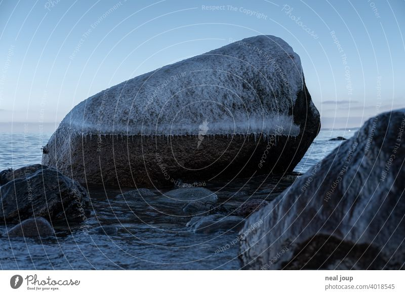 Large rounded boulder with frosty ice cap on winter shore Exterior shot Nature Landscape coast Ocean Baltic Sea Winter Ice Contrast Tree filigree Cold Blue