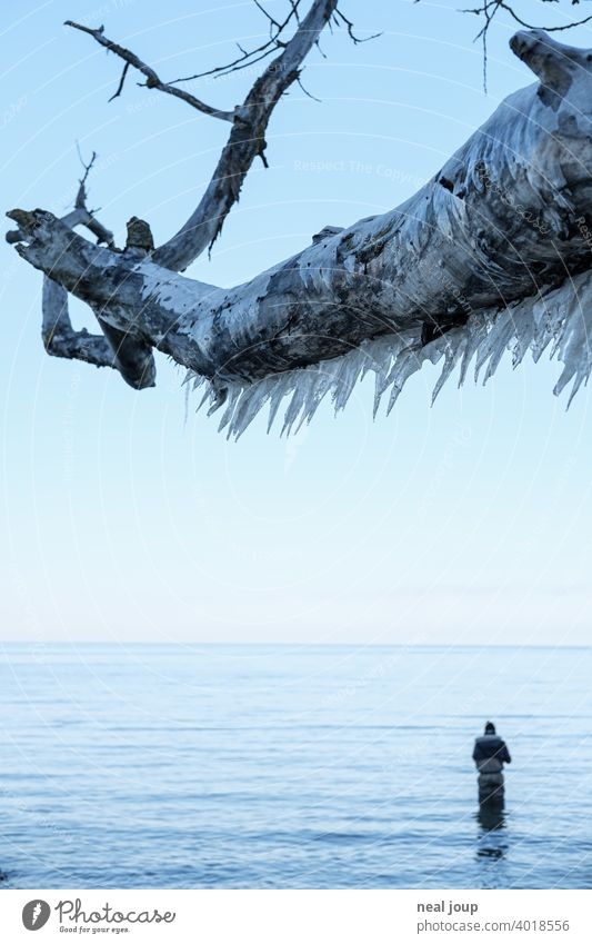 Thick branch full of icicles towers over the still wintry Baltic Sea where an angler tries his luck Exterior shot Nature Landscape coast Ocean steep coast
