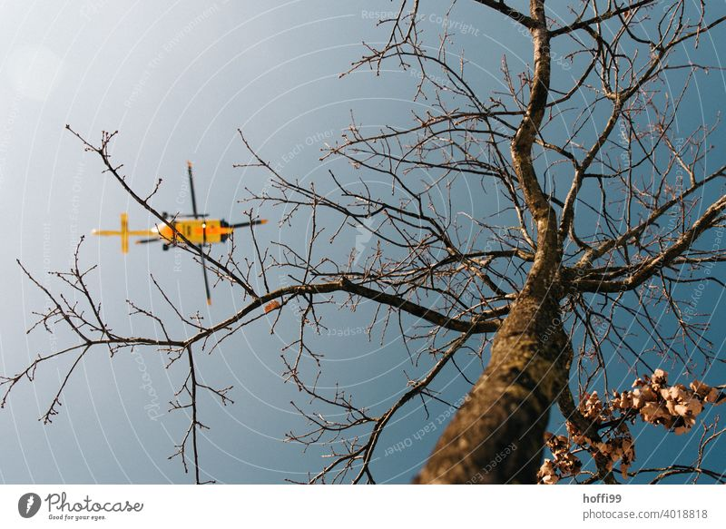 Helicopter and tree - the rescue comes Rescue helicopter Tree bare trees Emergency emergency alarm Flying Winter Blue Environment Aviation Sky Exterior shot