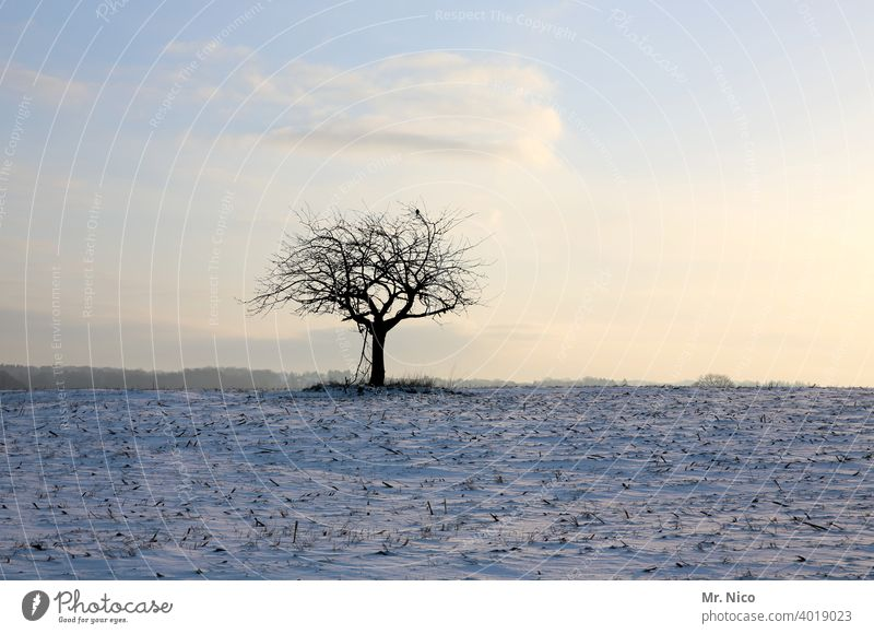 winter's day Tree Nature Sky Landscape Field Environment Winter Snow White winter landscape Frozen silent Idyll Hoar frost acre Winter mood Winter's day