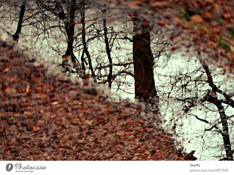 Nature Beautiful Tree Leaf Calm Forest Autumn Brown Moody Transience Change Twig Autumn leaves Brook Autumnal Dreamily