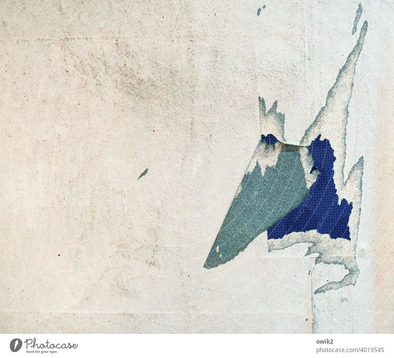King Without Plan Advertising column Paper Head Nose Coincidence Hang Ravages of time Colour photo Exterior shot Detail Close-up Broken Structures and shapes