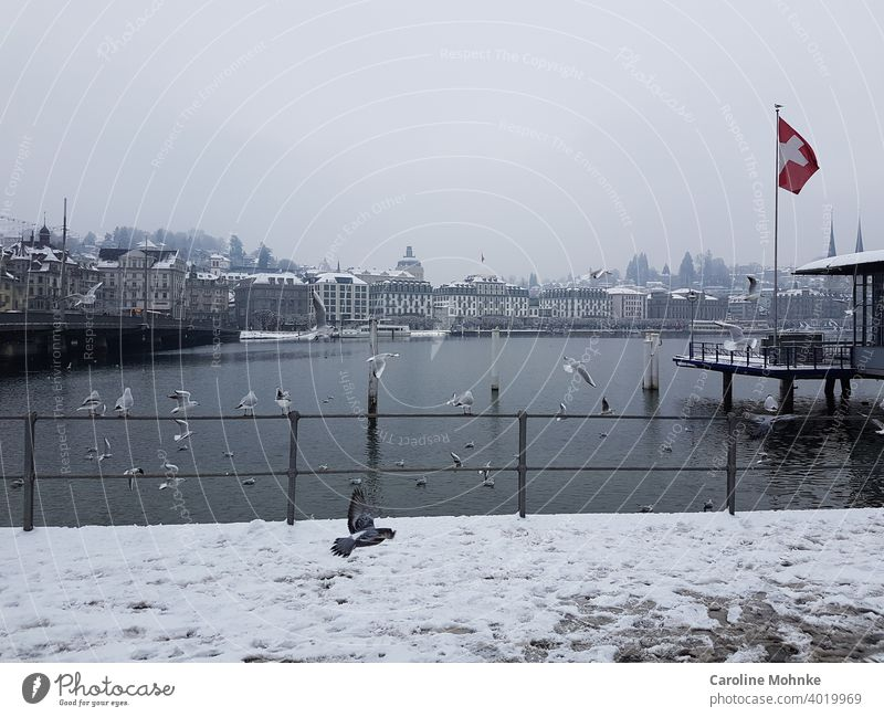 Winter atmosphere in Lucerne/Switzerland at the lake with seagulls and pigeon approaching. Snow Lake Water Exterior shot Colour photo Deserted Tourism Landscape