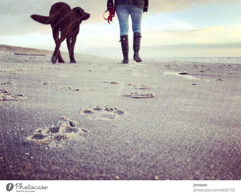 Beach walk with dog Dog Labrador Labrador retriever Brown Walk on the beach Pawprint Tracks traces in the sand leave traces North Sea North Sea coast Sand Woman