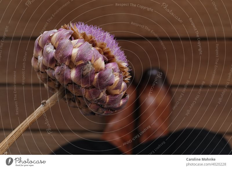 Woman in brown boots standing on a wooden floor holding a dried artichoke flower in her hand Artichoke Close-up Colour photo dehydrated Plant Artichokes Food