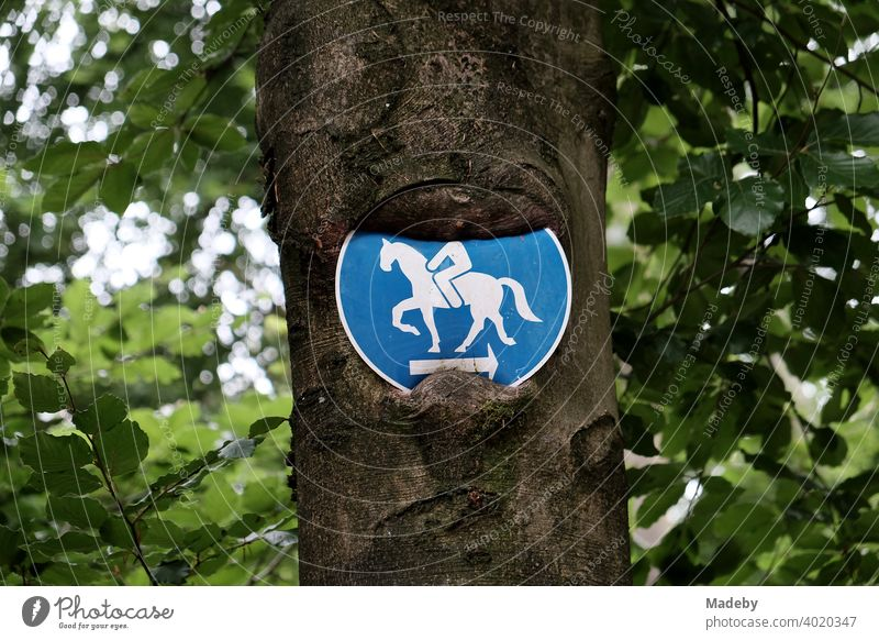A road sign warns of the headless horseman at the Hermannsweg near Oerlinghausen in the Teutoburg Forest in East Westphalia-Lippe Rider on horseback Sign