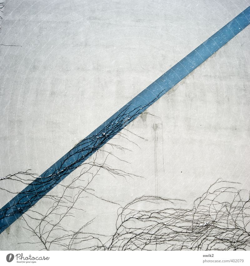 gross national product Plant Tendril Wall (barrier) Wall (building) Facade Growth Thin Simple Firm Long Blue Gray White Line Diagonal Creeper To hold on Surface