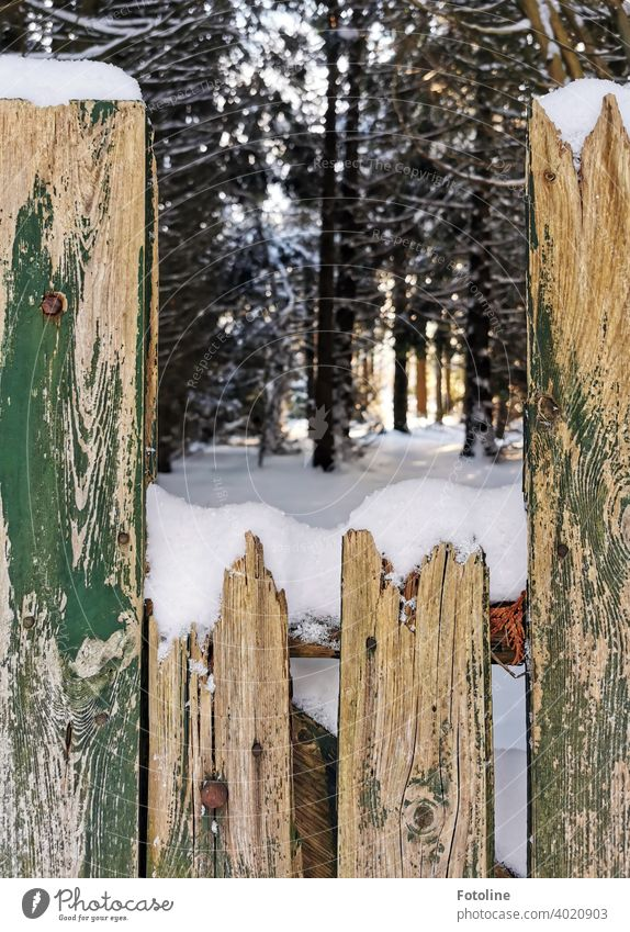 Behind this old weathered fence lies the snowy winter wonderland winter landscape Winter Snow White Cold Nature Landscape Snowscape Winter mood Winter's day