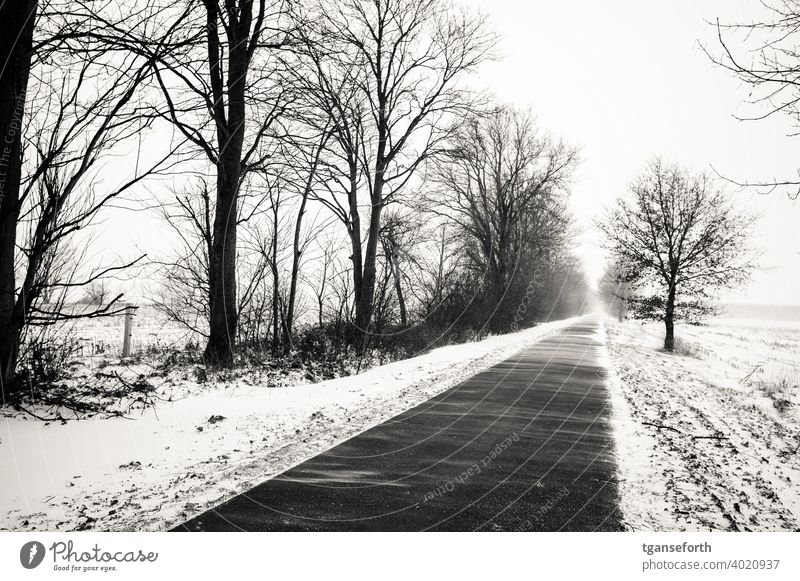 Snowdrifts Winter snow drifts Snowstorm road Exterior shot Snowfall Cold Storm Gale Tree Frost Weather Deserted Snowscape Snow layer snow-covered Storm damage