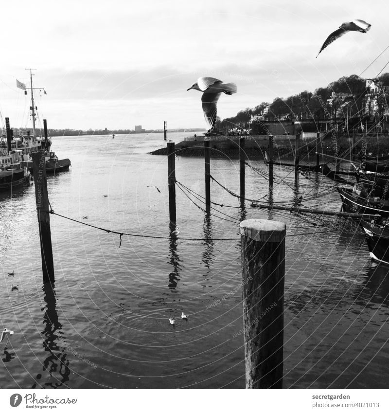 Watch out, birds of a feather! Bird Elbe Hamburg Harbour Jetty Port of Hamburg River Black & white photo Water Navigation Deserted Watercraft Transport