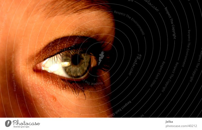 Woman Face Adults Eyes Eyelash Senses