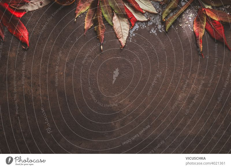 Dark autumn background with red fall leaves border. Top view dark top view half pumpkin frame nature design rustic leaf plant natural