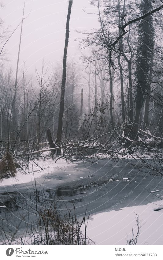 frozen marshland Winter Snow Tree Landscape Ice Frost Cold Nature Exterior shot Colour photo White Deserted Day Subdued colour Marsh Gray Environment Loneliness