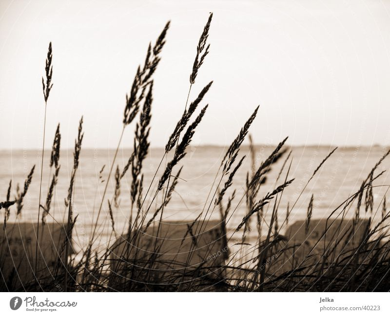 lagoon jug Ocean Landscape Grass Baltic Sea Tourism Common Reed Beach chair Europe Black & white photo Exterior shot Deserted Twilight
