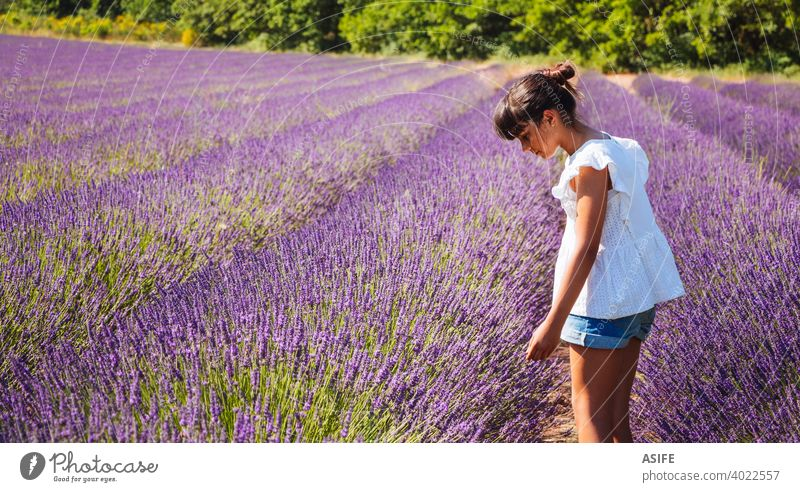 Cute happy girl watching the flowers in a lavender field in summer child kid fun joy Provence France nature vacation landmark people one Europe tourism tourist