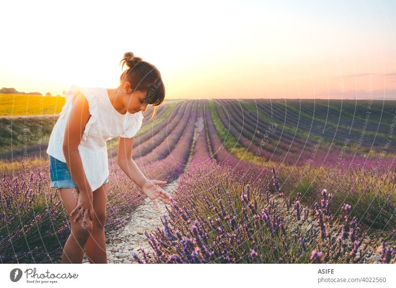Cute girl touching flowers in a french lavender field at sunset child kid summer fun joy happy Provence France nature vacation landmark people one Europe
