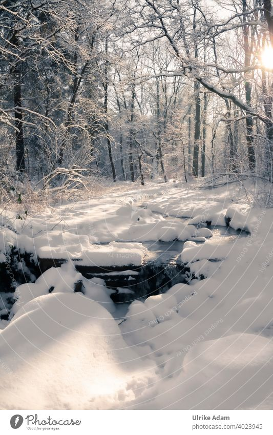 Another bit of winter wonderland - snow covered stream in winter forest Garlstedt Osterholz-Scharmbeck Climate Environment Lower Saxony Bremen idyllically