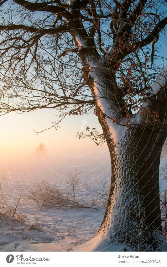 Oak in winter light Fog Germany Worpswede Osterholz-Scharmbeck Bremen devil's mire Hoar frost Calm White Sky Climate Climate change Ice Tree Cold Moody Hope