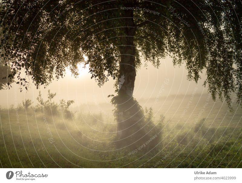 The mystical birch - tree in the fog at sunrise in the Teufelsmoor near Worpswede Fog Birch tree devil's mire Mystic Osterholz-Scharmbeck Bremen Landscape Haze