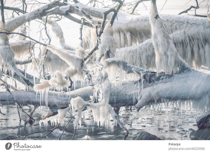 Icicles on a frozen tree by the seashore branch melt northern cool seasonal freeze nobody december beauty snowy icing temperature clear outdoors january shiny