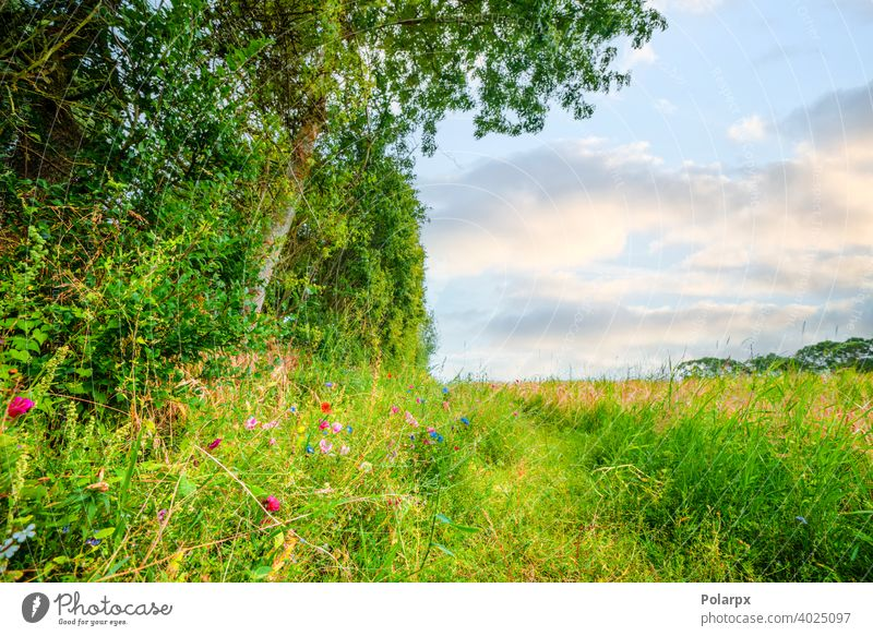 Colorful wildflowers on an idyllic meadow purple scenic petal foliage floral yellow scenery view bloom countryside natural colorful botany outdoor blooming
