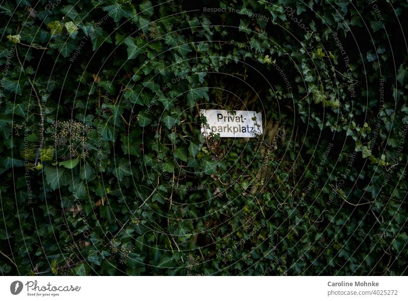 """Sign """"Private parking place"""" embedded at an ivy wall sign Parking lot Ivy Signs and labeling Signage Deserted Characters Letters (alphabet) Colour photo"""