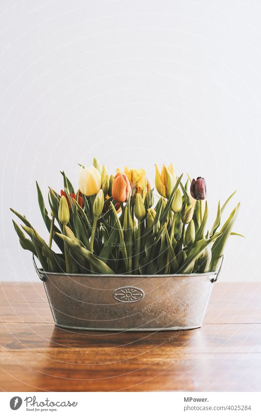 spring flower tulip Tulip flowers Flower vase Spring Vase Table Spring fever Spring flower Bouquet Blossom Decoration Blossoming Deserted Plant Tulip blossom