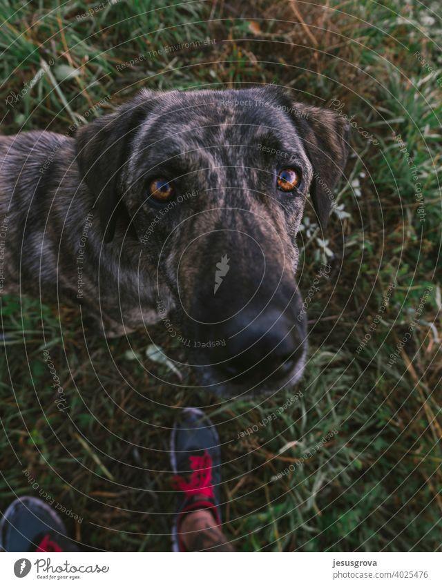 Always with my best friend Innocent Observe Grass Herding dog Green Curiosity Safety Animal portrait Exterior shot Guard Black Brown Colour photo Pet Cute