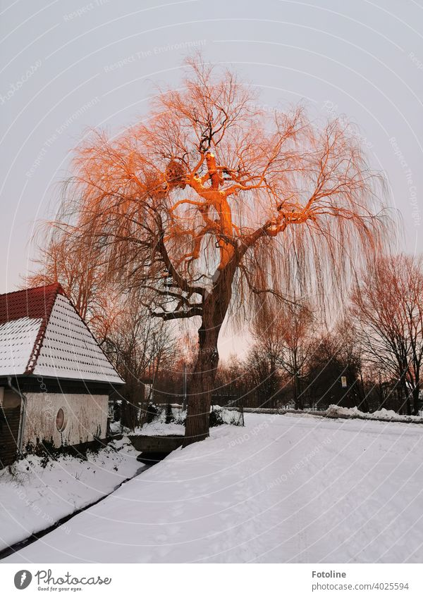 It is still early. Very slowly the rising sun bathes the tree in a red-golden light. Sunrise Tree Winter Landscape Exterior shot Colour photo Nature Deserted