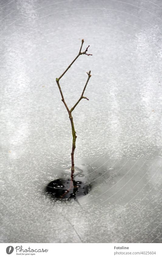 A small branch sticks out of a frozen creek. Winter Ice Ice sheet Aggregate state Cold icily Frozen Frost Nature White Exterior shot Deserted Day Water