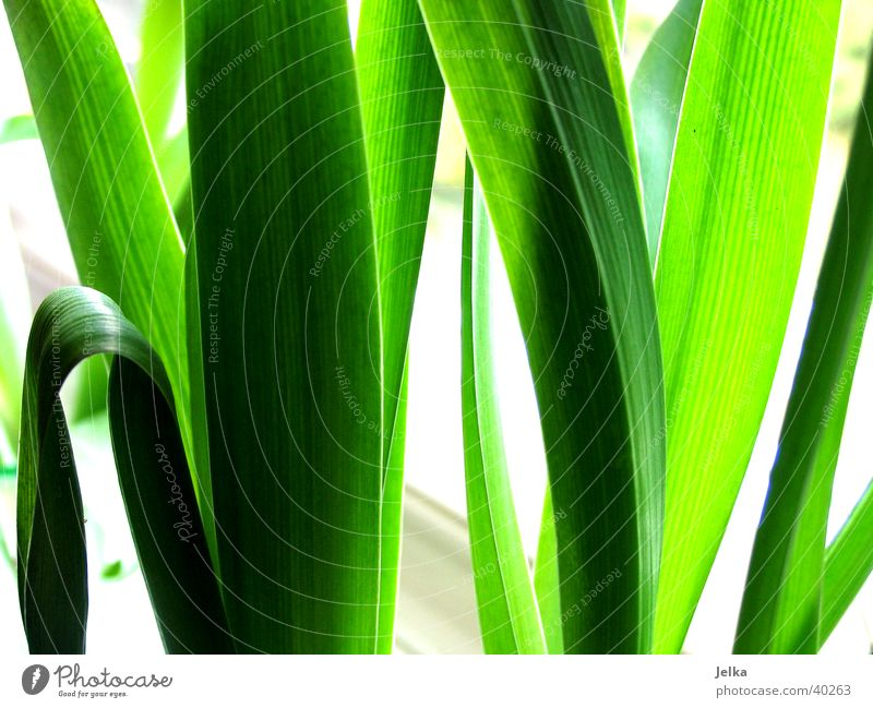 Nature Green Plant Leaf Tulip
