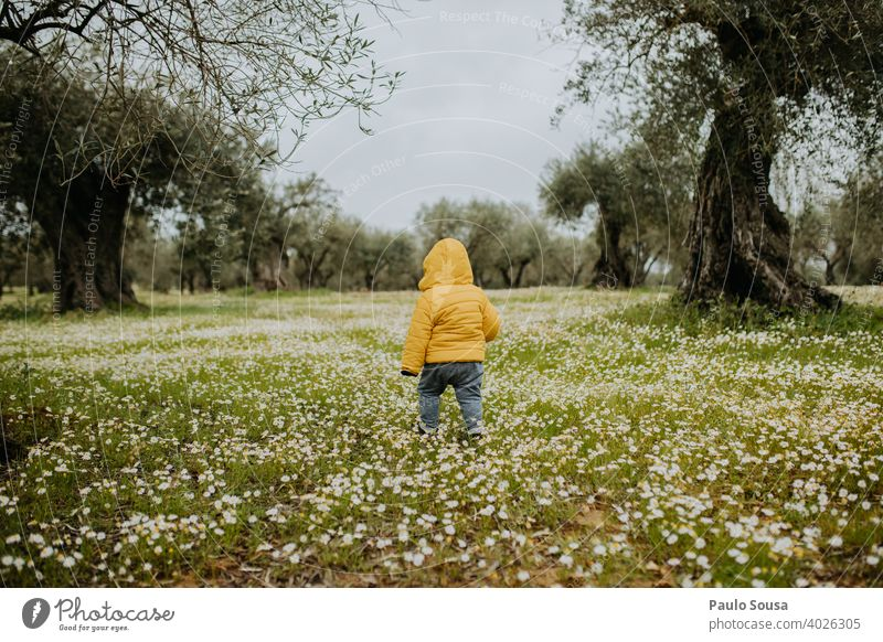 Rear view toddler walking through spring flowers field Toddler Child childhood Yellow Spring Spring fever Spring flower Flower Flower field Day Green Blossoming