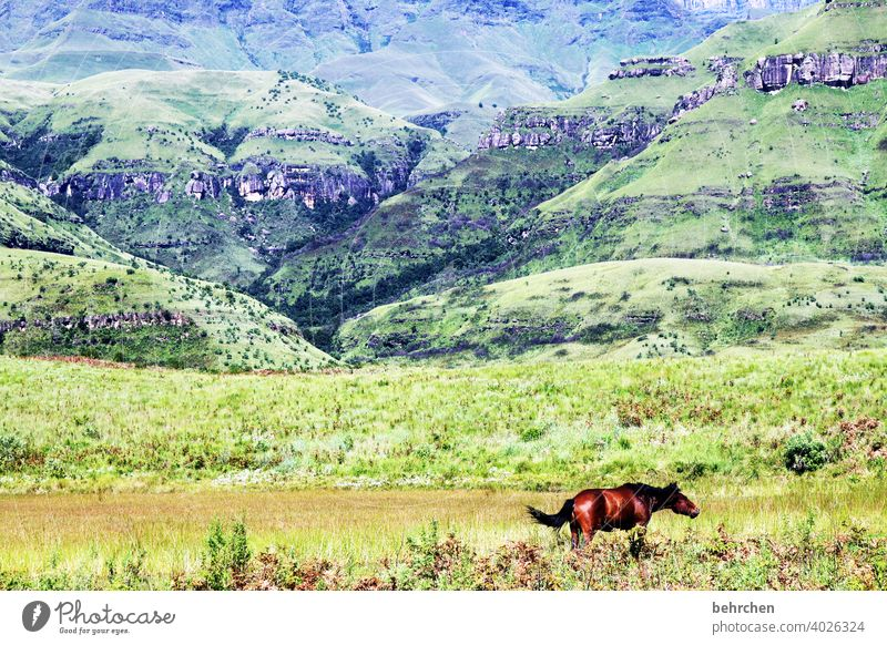 freedom Sunlight Contrast Light Day Exterior shot Colour photo Drakens Mountains South Africa Gorgeous pretty Wanderlust Hiking Green Fantastic Exotic