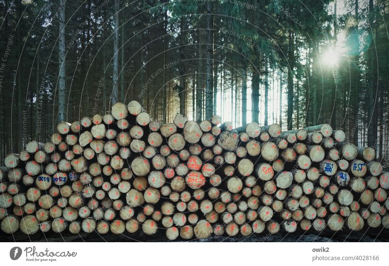 Wooden reserve Nature Environment Exterior shot Stack of wood Tree Detail Heavy disparate stacked Many Tall Deserted Colour photo Day Round naturally