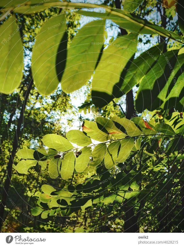 Angle elements Leaf canopy Nature Colour photo Environment Sunbeam Tree Back-light Illuminate Light Light (Natural Phenomenon) Day Shadow Deserted