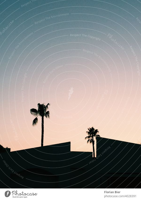 Silhouette of palm trees and house roofs in the sunset Palm tree Back-light Sunset Sky Evening Shadow Twilight Contrast Esthetic Geometry geometric