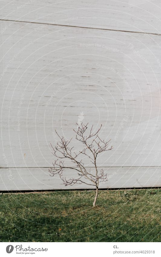 offshoot Tree Small wax Growth Wall (building) Lawn Grass Twigs and branches 1 Green Gray Nature Town Individual symbolic Deserted Exterior shot Spring