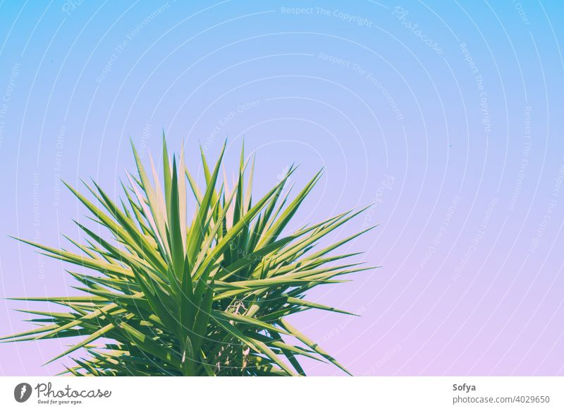 Abstract botanical background with palm tree against the skies leaf purple green plant texture pattern toned wallpaper foliage lavender violet summer abstract