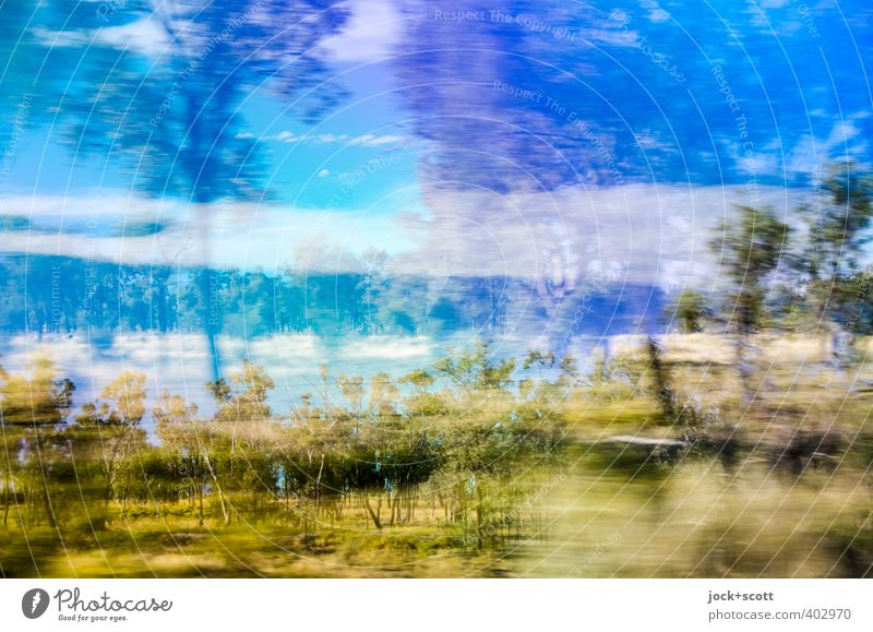 brandy bush Expedition Tree Bushes Outback Queensland Driving Speed Wanderlust Lack of inhibition Exotic Nature Double exposure Speed rush Tropical Muddled