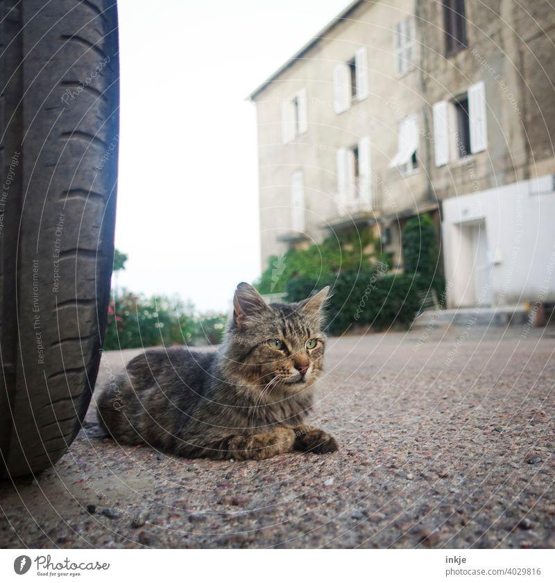Street cat in Corsica Colour photo Exterior shot Animal Life Close-up Wild Cat Prowl Free-living Animal portrait